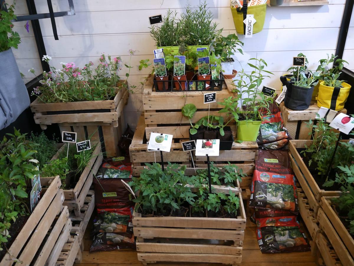 Jane - Jardinerie urbaine Nantes 4